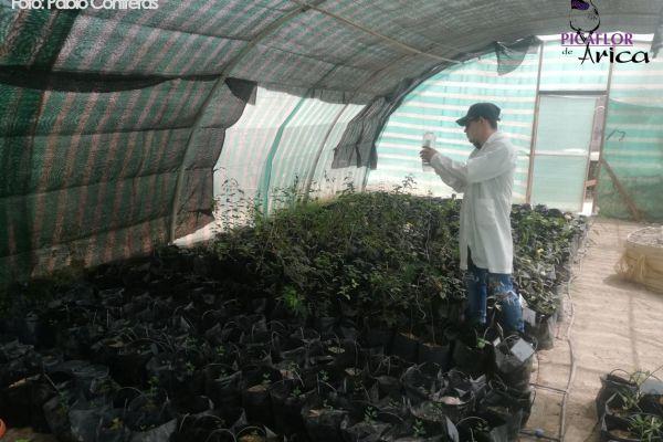 proyecto-reforestación-1_logo156D3500-19E0-9021-FC6E-F02707856889.jpg