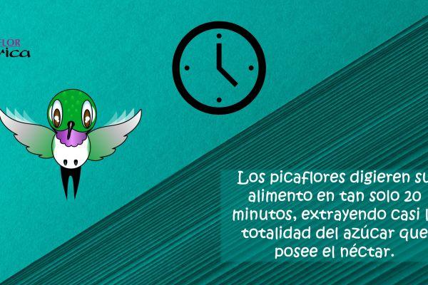 diapositiva1427325335-6F7A-387A-DF10-E93B838AEF1C.jpg