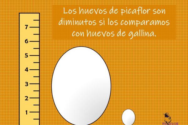 diapositiva543B553F6-D8DD-14B4-9718-44C476565F5B.jpg