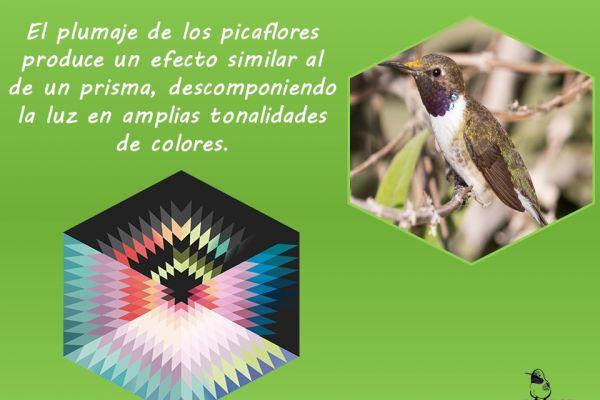 diapositiva753608648-37A7-021C-C9B7-5253330BE2AD.jpg
